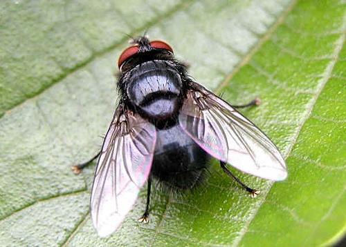Dịch vụ diệt ruồi - Chất Lượng - Hiệu quả - Uy Tín
