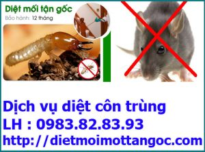 dich-vu-diet-moi1