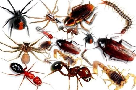 Dịch vụ diệt côn trùng tận nơi