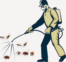 Dịch vụ phun thuốc muỗi - Phun muỗi uy tín tại Hà Nội