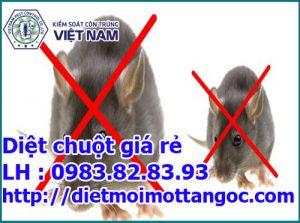 diệt chuột tại nhà