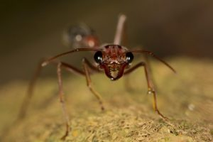 thuốc diệt kiến