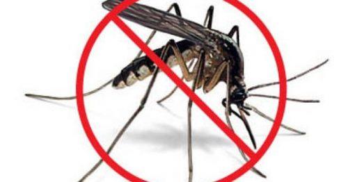 diệt côn trùng tại nhà