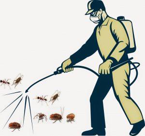 phun thuốc diệt côn trùng tại nhà