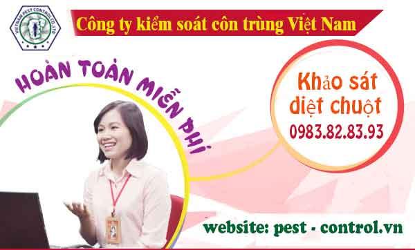 Diệt mối tại Xuân Trường Nam Định