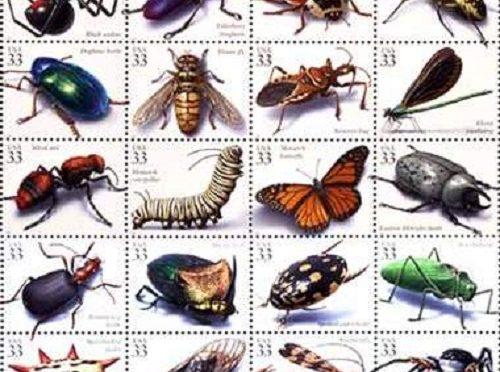 các loài côn trùng