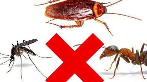 tác hại của côn trùng