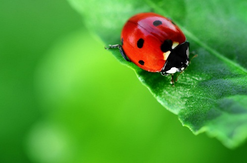 côn trùng có lợi