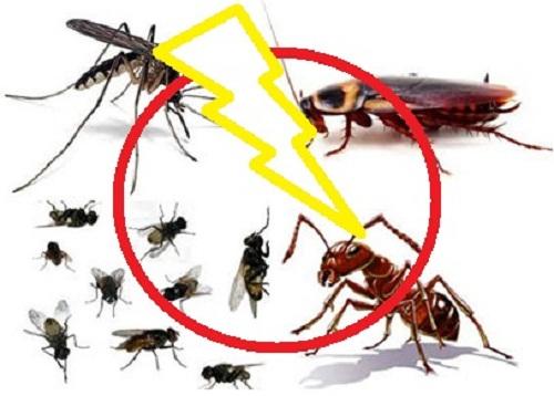 côn trùng có hại