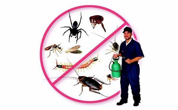 Dịch vụ diệt côn trùng giải quyết mọi thứ nhanh hơn, hiệu quả hơn