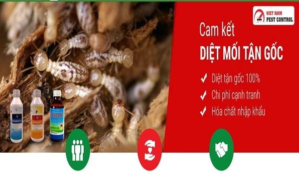 Vietnam Pest Control - Đơn vị chuyên cung cấp dịch vụ diệt mối tận gốc tại TPHCM