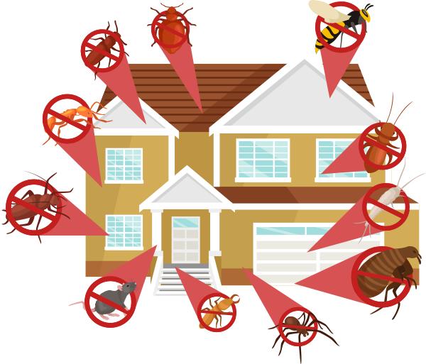 Vietnam Pest Control- dịch vụ diệt mối tại TPHCM uy tín, chất lương
