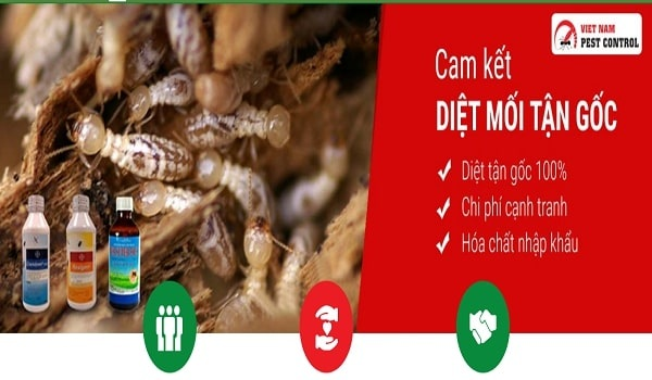 Dịch vụ diệt mối tận gốc tại tphcm VietNam pest Control